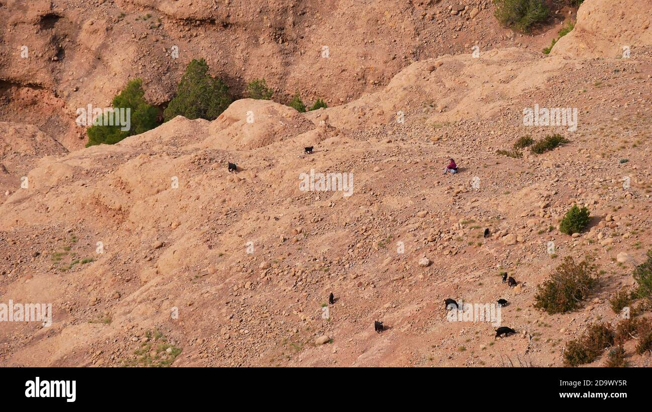 Female goatherd tending a group of black colored goats on a dry slope below popular rock formation cathedrale imsfrane near Tilouguite, Morocco. Stock Photo