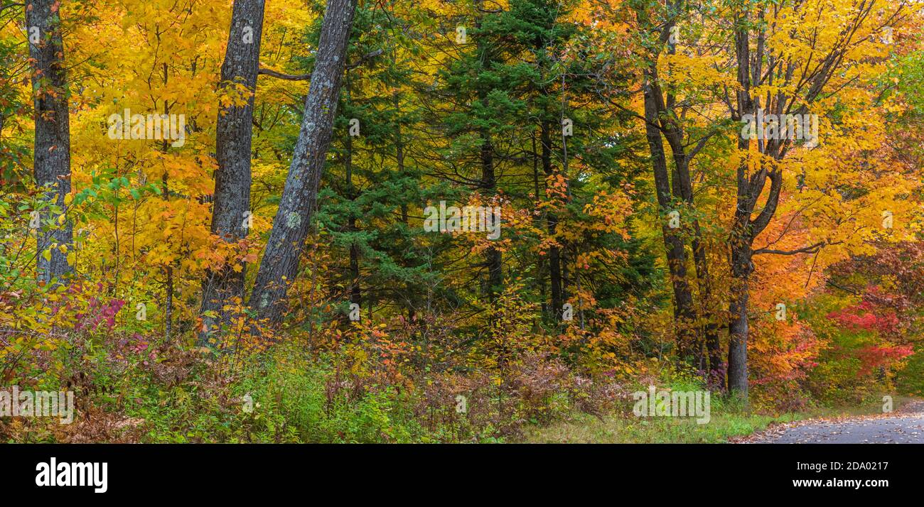 Autumn forest in northern Wisconsin. Stock Photo