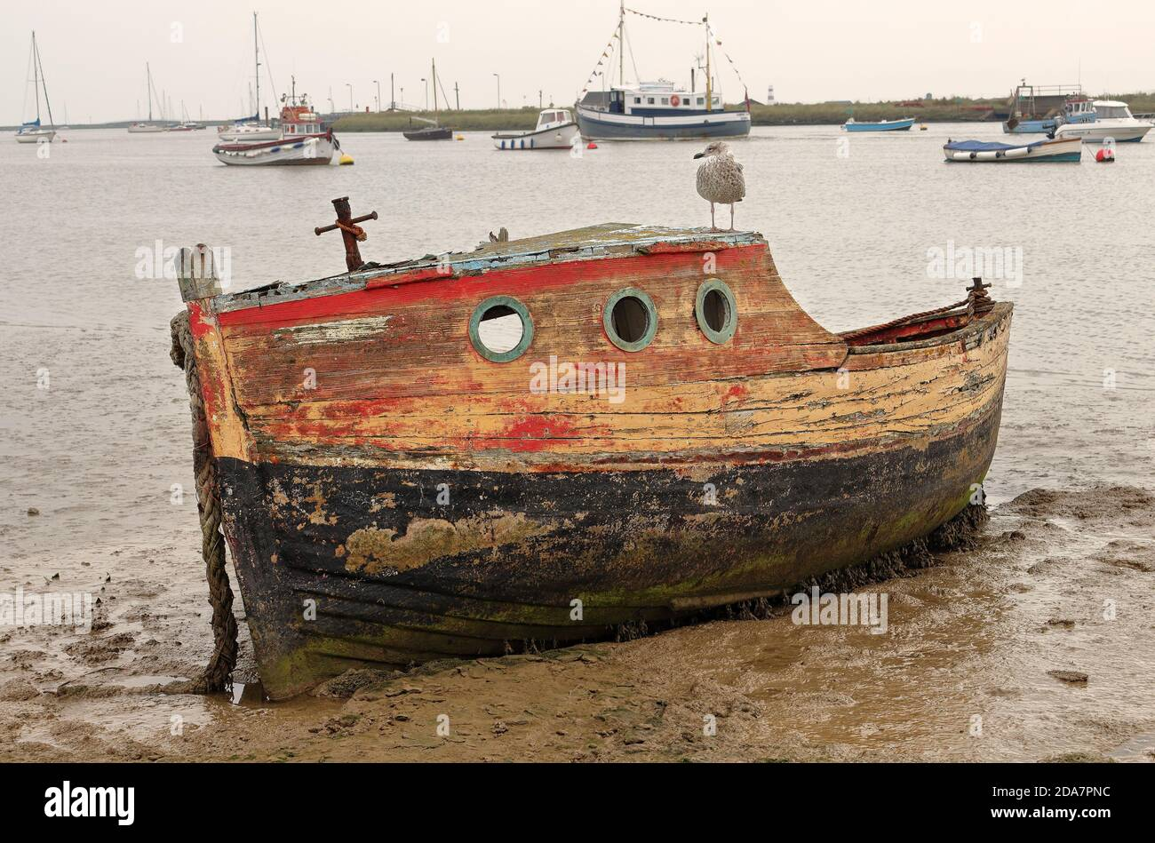 Boat wreck on a tidal estuary in Suffolk, UK, with seabird perched on the roof Stock Photo