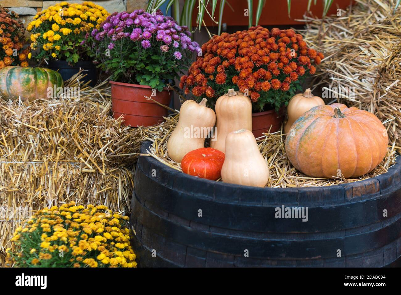 Autumn Decor With Natural Straw Bale Pumpkins Flowers And Old Wooden Barrels Harvest And Garden Outdoor Decorations For Halloween Thanksgiving Stock Photo Alamy