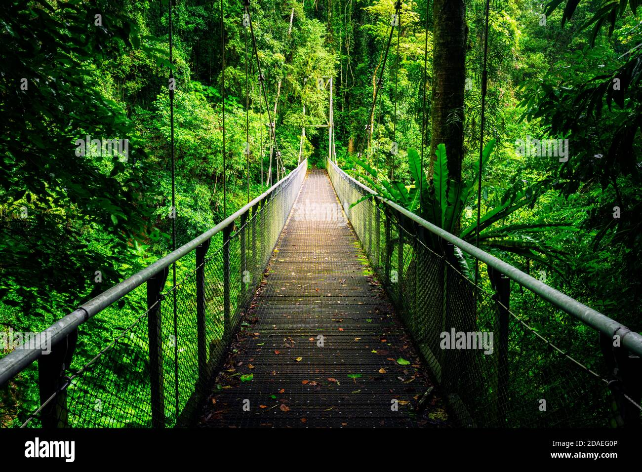Suspension Bridge on a walking track in the rainforest of Dorrigo National Park. Stock Photo