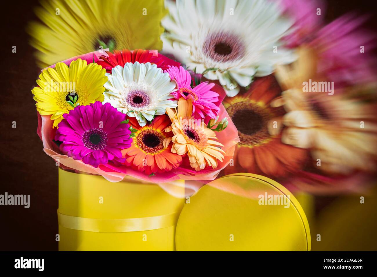 Blurred floral background, double exposure, colorful multicolored gerbera flowers in yellow box. Concept of holidays and gifts Stock Photo