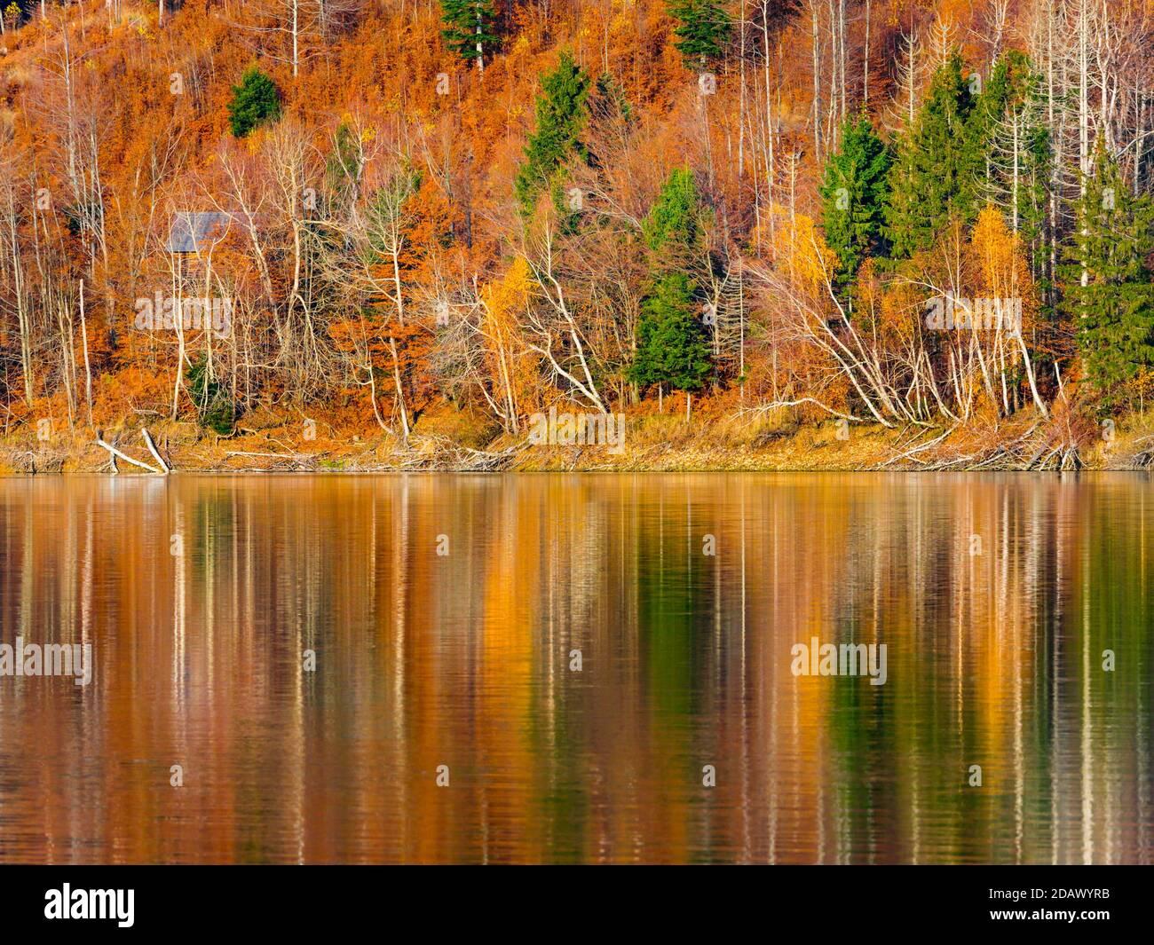 Spectacular warm colors Autumnal lake reflection Lokve lake Lokvarsko jezero in Croatia Europe Stock Photo