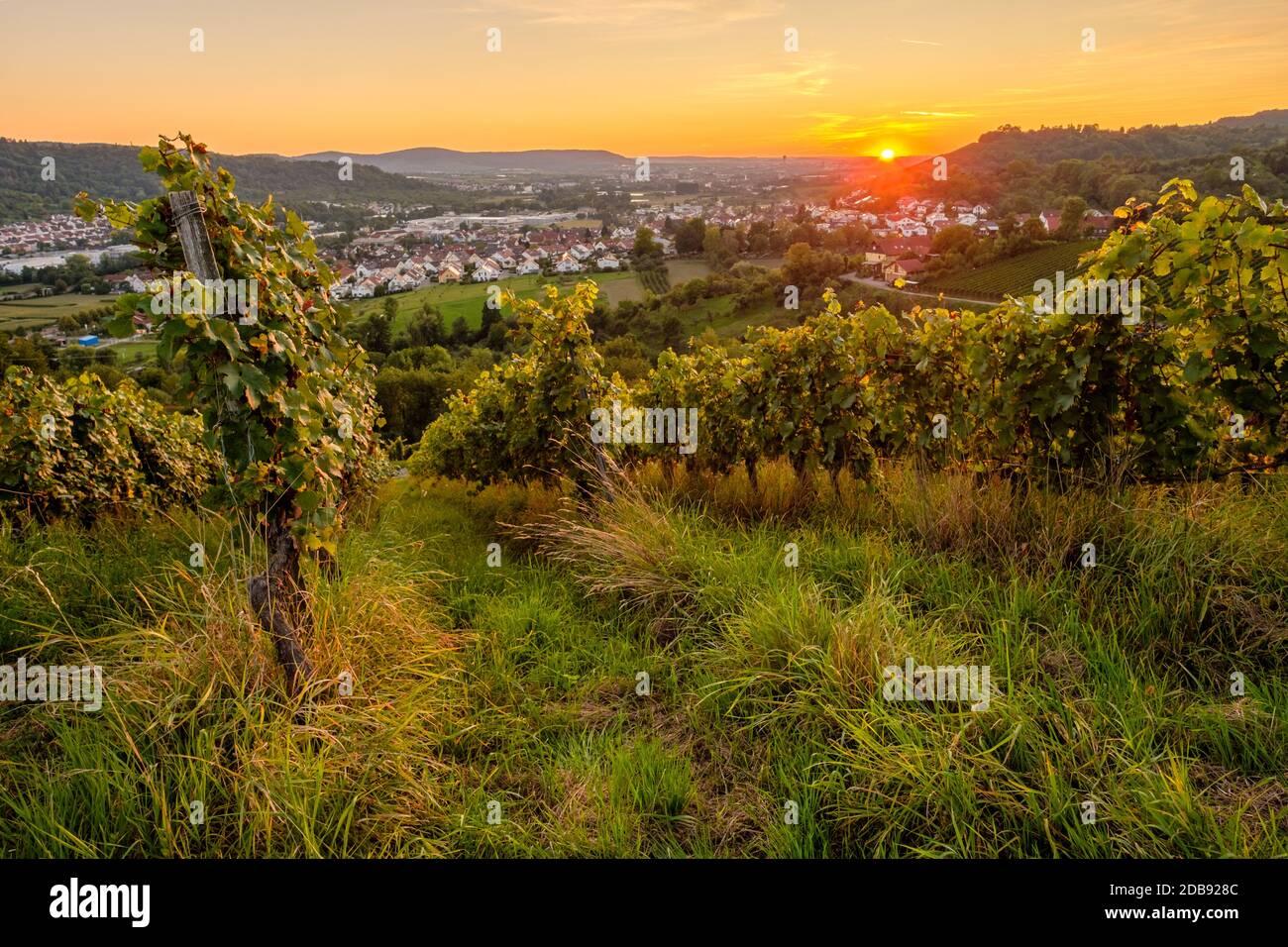 Sonnenuntergang im Weinberg Weitwinkel Landschaft Stock Photo