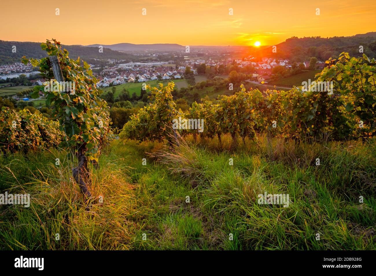 Weinberg Sonnenuntergang im Sommer mit Sonnen Stock Photo