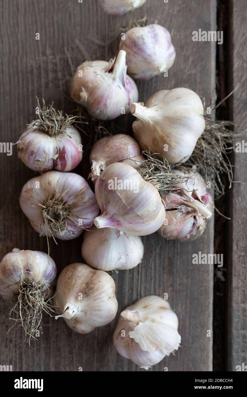 Close up of freshly dug heads of garlic bulbs on wooden table. Top view Stock Photo