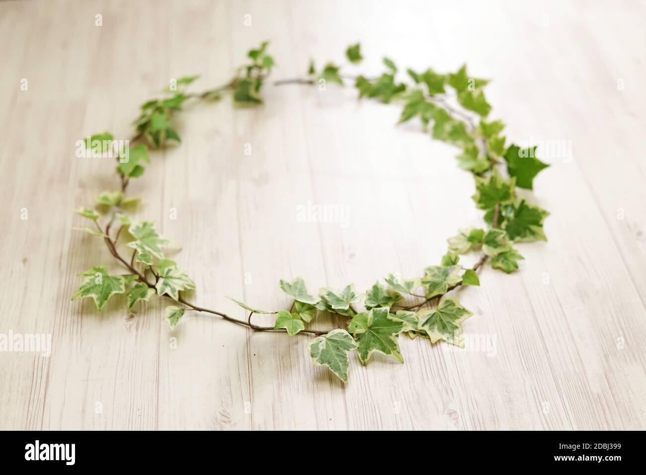 Ivy Wreath High Resolution Stock Photography And Images Alamy