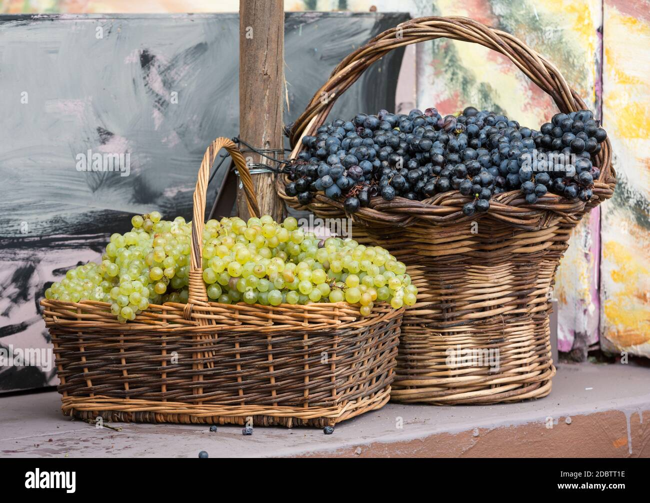 bunches of white and black grapes in a wicker basket. Stock Photo