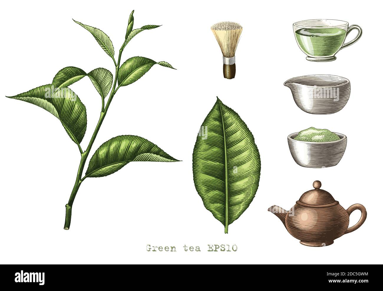 Green tea collection hand drawing engraving style clipart isolated on white background Stock Vector