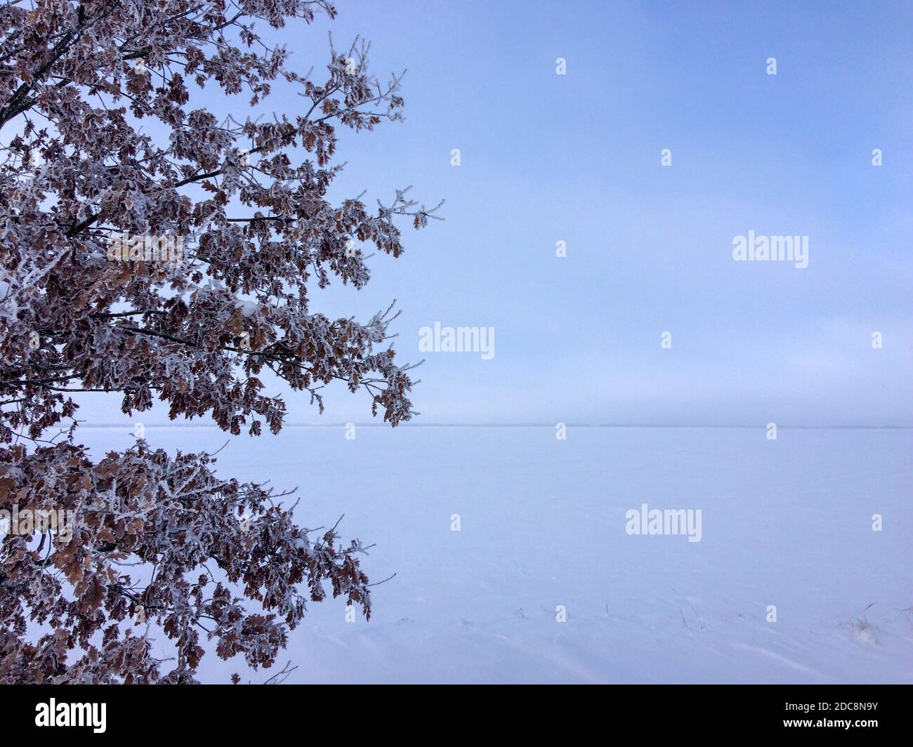 tree in the snow-covered field, frosty day Stock Photo