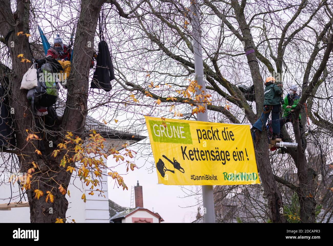 """Wiesbaden, Germany. 20th Nov, 2020. Activists stop with a demo banner """"Green packs the chainsaw! #Danni stays Robin Wood"""" trees. Activists of Robin Wood, environmental and nature conservation organisation, have occupied two trees in front of the party headquarters of the Hessian Greens in the state capital. The organisation is protesting against the clearings in connection with the expansion of the A49 and wants to remind the Greens in Hesse of their political responsibility. Credit: Andreas Arnold/dpa/Alamy Live News Stock Photo"""