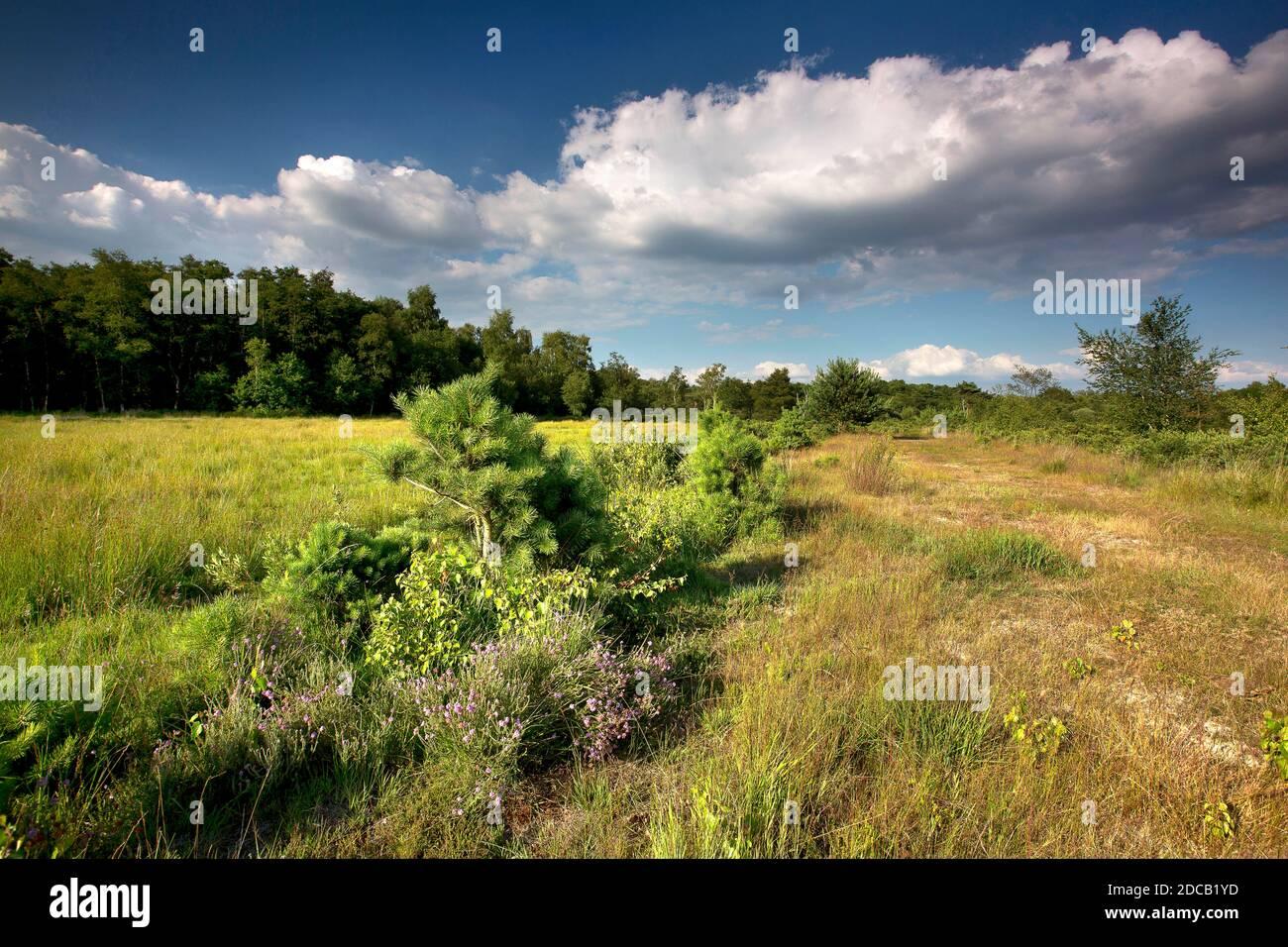 landscape at Buitengoor-Meergoor, Belgium, Buitengoor-Meergoor, Molale Stock Photo
