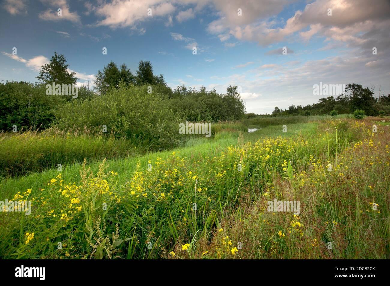 nature reserve de Zegge, Belgium, De Zegge Stock Photo