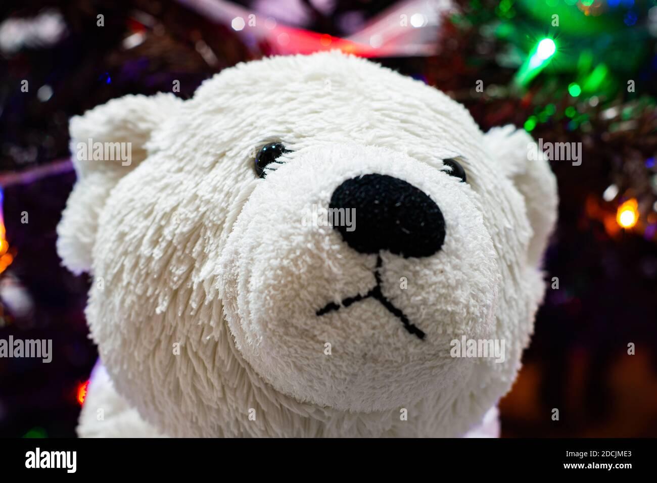 Polar bear face in front of  Christmas tree Stock Photo