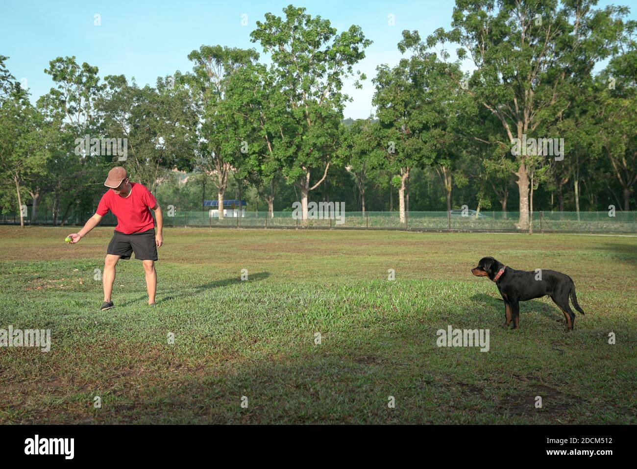 Man Holding A Toy Doing Training With His Rottweiler Puppy On The Field Stock Photo Alamy
