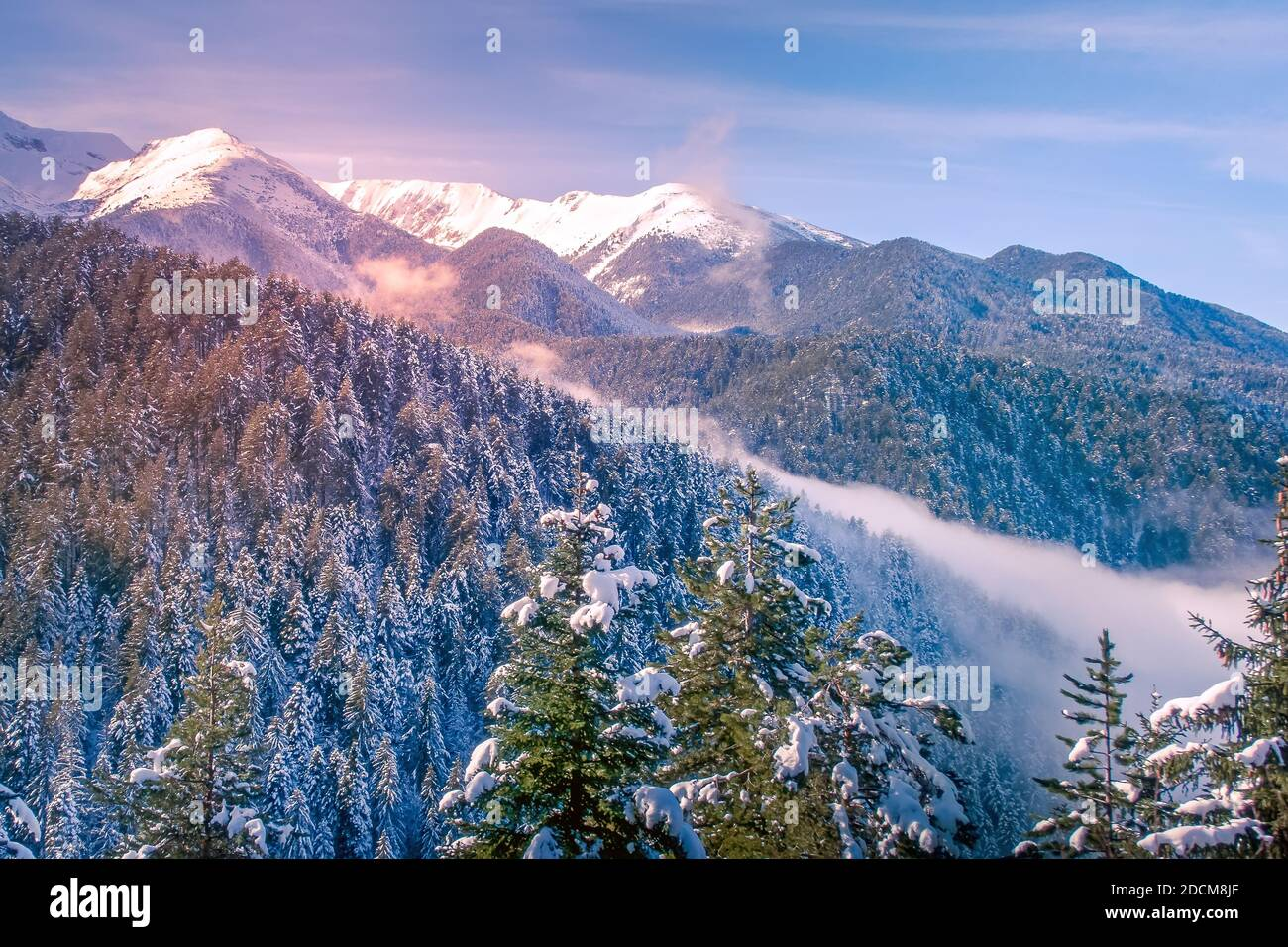 Colorful winter landscape with pink sunset view, pine trees and snow mountain peaks of Pirin, Bulgaria Stock Photo