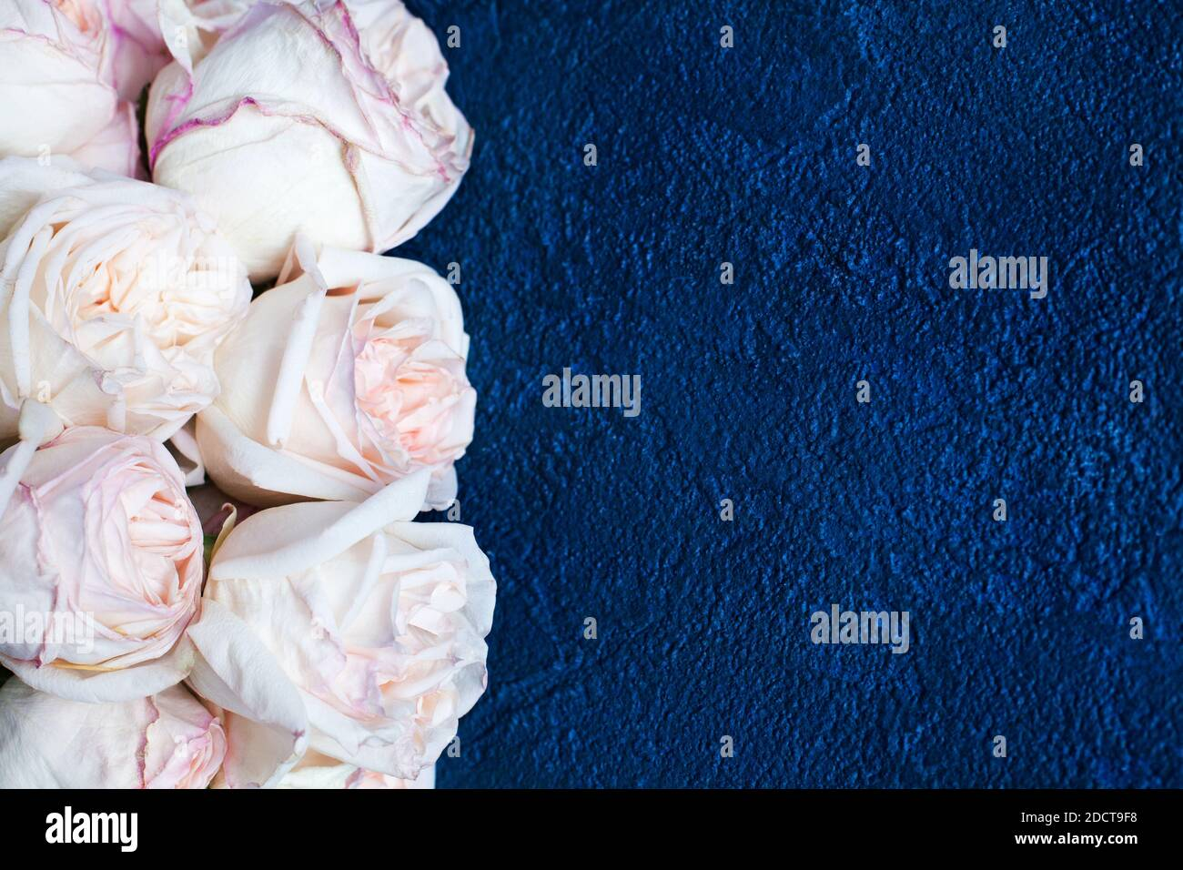 Delicate Light Pink Roses Dark Blue Stucco Background Close Up Beautiful White Flowers Bouquet Birthday Greeting Card Valentines Day Wedding Frame Stock Photo Alamy