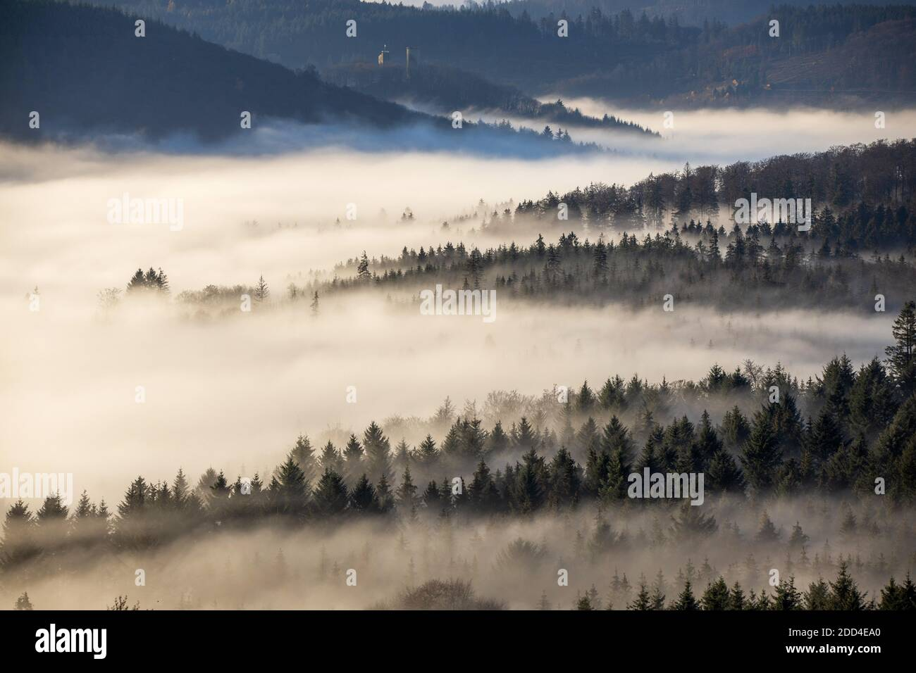 Schwithten, Deutschland. 24th Nov, 2020. 11/24/2020, Schwithten (Hessen): The high elevations of the Taunus with the Grosse Feldberg protrude from a sea of fog in the morning after sunrise. (View to Reifenberg Castle) | usage worldwide Credit: dpa/Alamy Live News Stock Photo