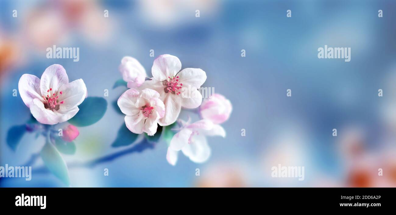 Blossom tree over nature background. Spring flowers. Spring Background. Blurred concept. Stock Photo