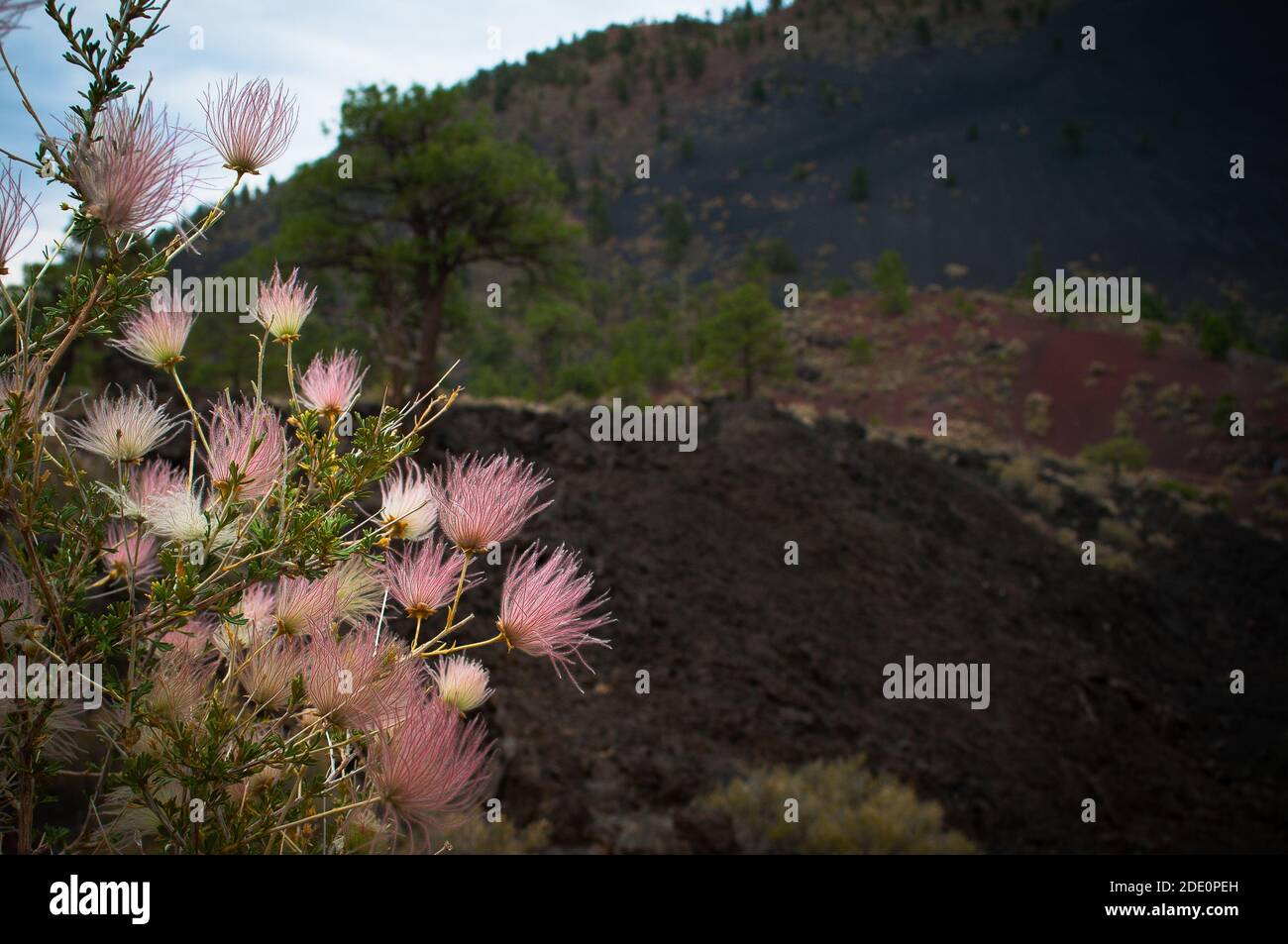 Sunset Crater is the youngest in a string of volcanoes that is related to the nearby San Francisco Peaks. Stock Photo