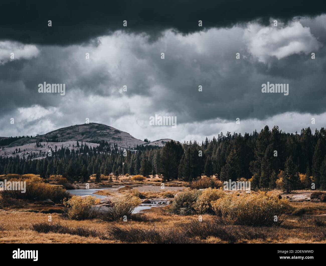 A river, autumn foliage, pine trees and a mountain under dramatic, stormy skies with light shining through the clouds at Tuolumne Meadows in Yosemite Stock Photo