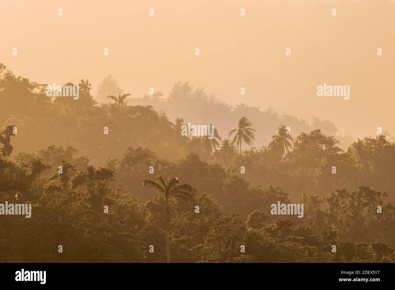 geography / travel, Jamaica, Lush tropical rainforest and mist in the foothills of the Blue Mountains , Additional-Rights-Clearance-Info-Not-Available Stock Photo