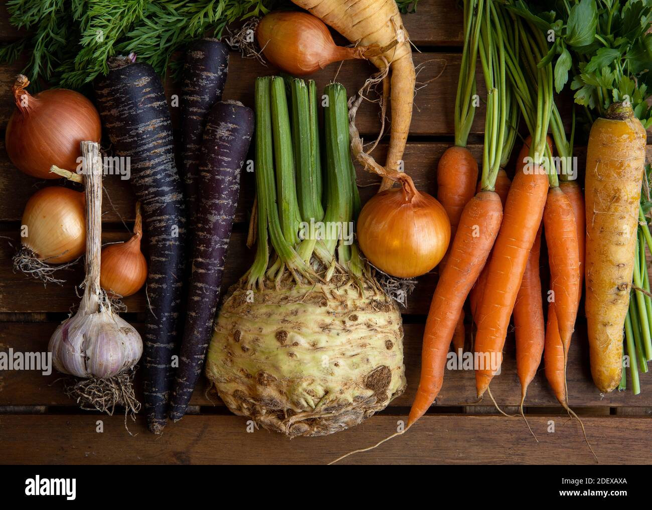 Assortment of colorful root vegetables fresh from the farmer's market including Onions, Garlic, Orange, yellow & Purple Carrots & Celery on wood. Stock Photo