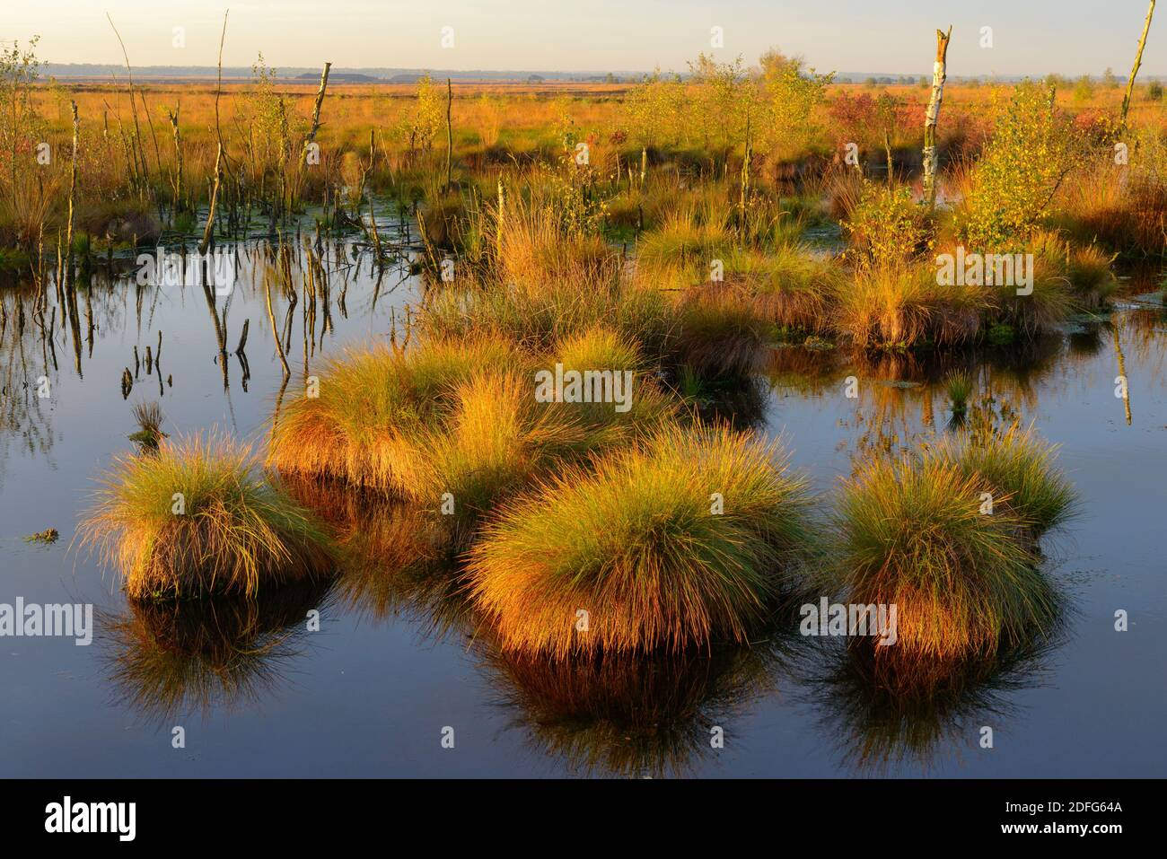 Goldenstedter Moor, Vechta, Stock Photo