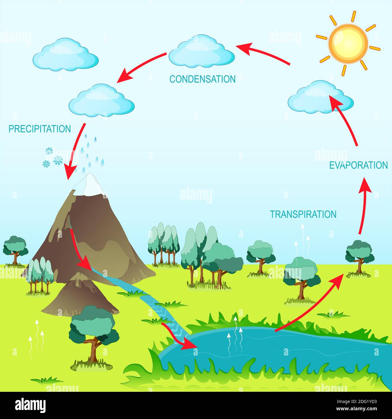 Water Cycle Diagram High Resolution Stock Photography And Images Alamy