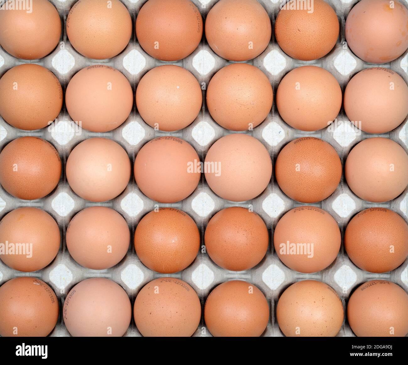 Braune Hühnereier in einer Palette Stock Photo