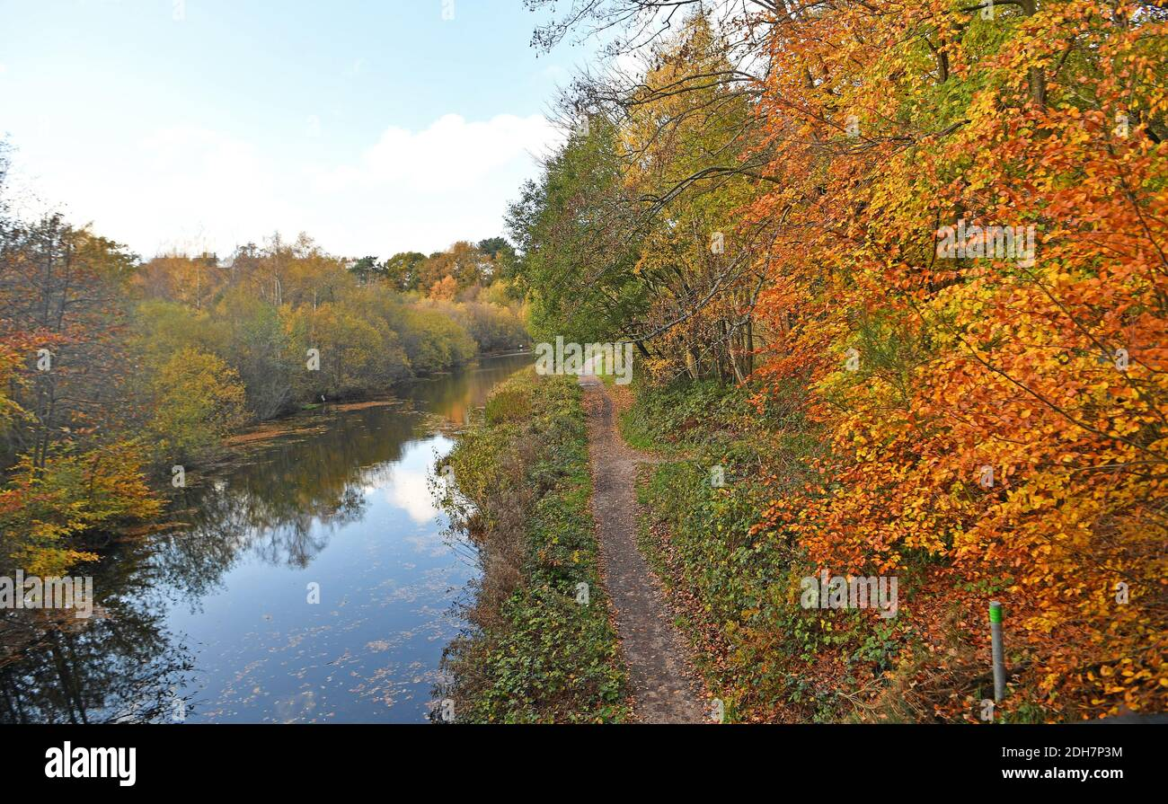 Photos for a feature on Wellesley Woodland, Aldershot - Autumn weekend walks feature. Basingstoke Canal. Stock Photo