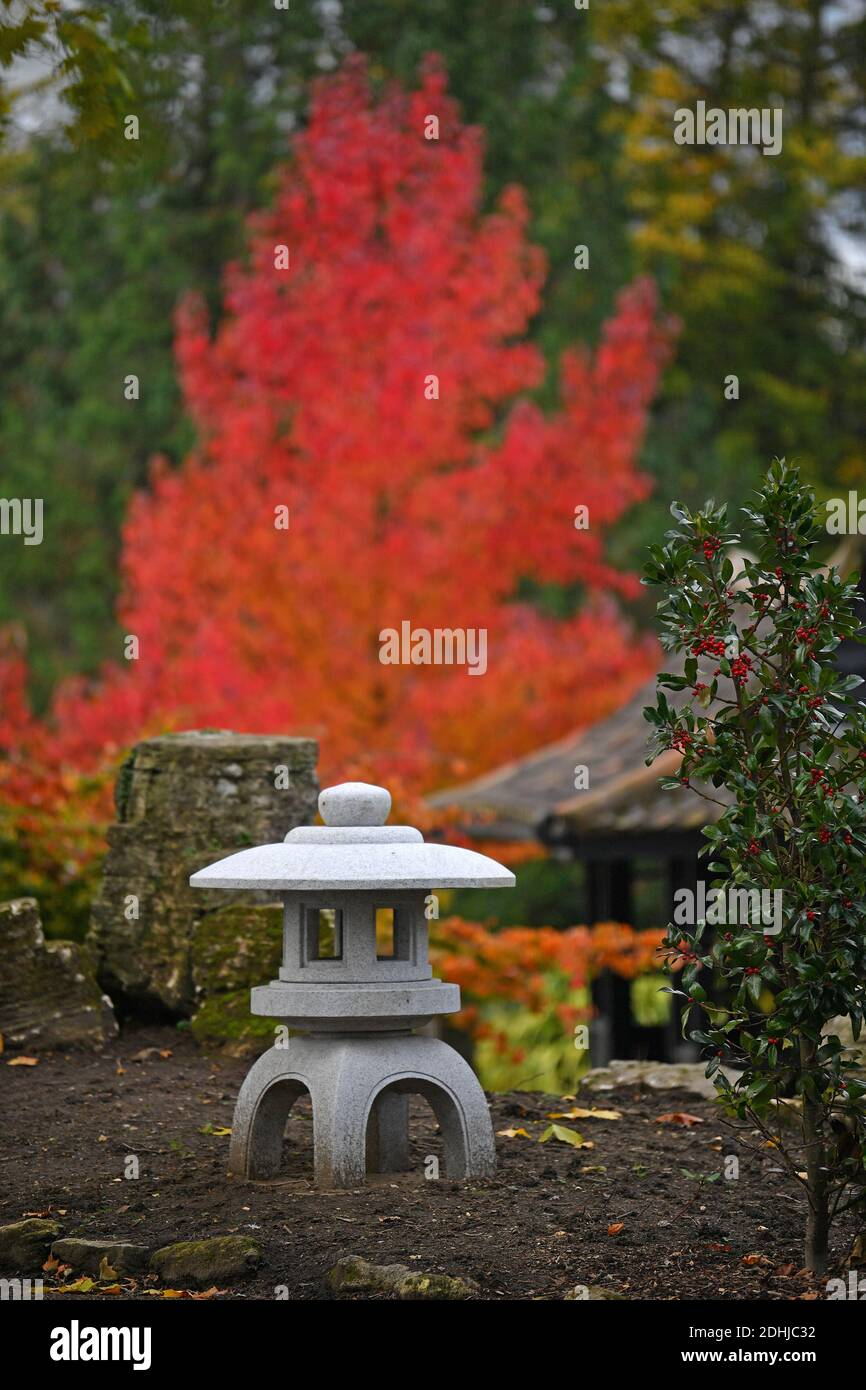 Feature on Stoke Park, Guildford - Autumnal colours, as work continues to restore and improve the oriental gardens.     Guildford, Surrey.  Picture taken 20th October 2020 Stock Photo
