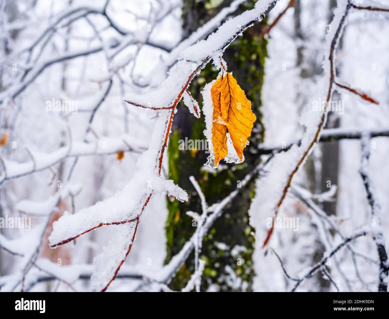 Croatia snow detail Gorski kotar county Stock Photo