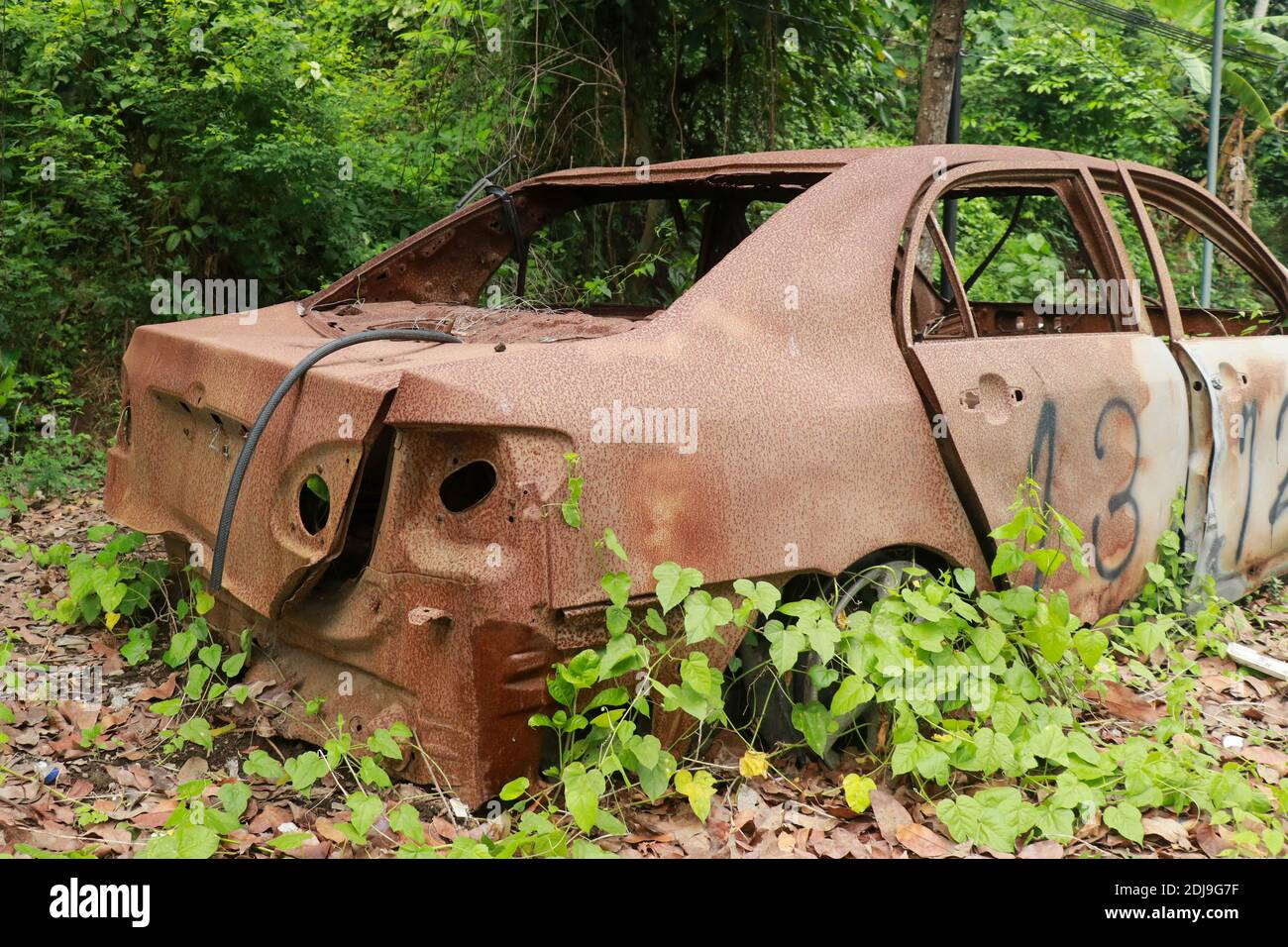 Cars damaged in fire on junkyard. An Old Car Covered in Vines and Pinestraw Stock Photo