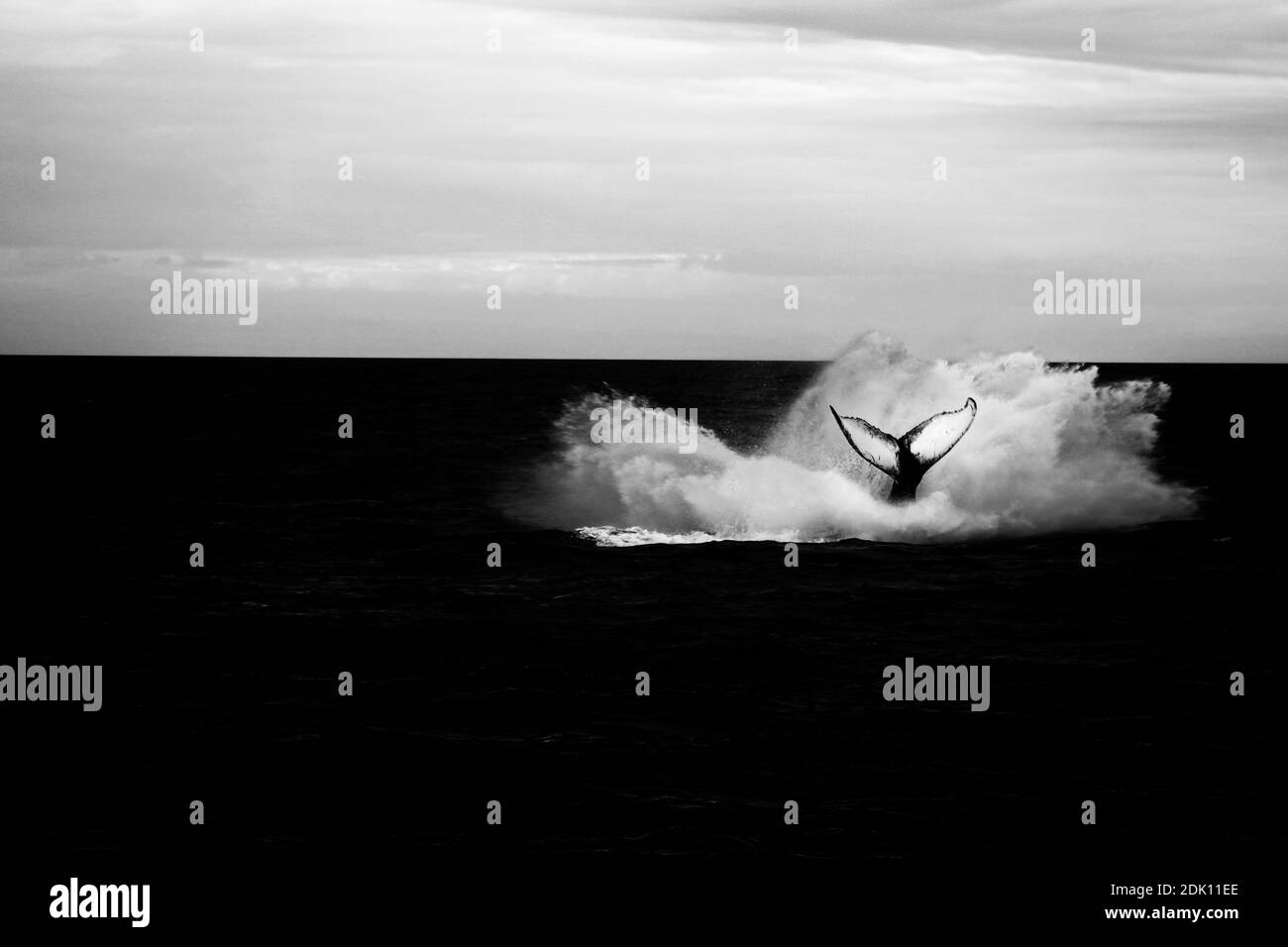 Whale Splash Stock Photo