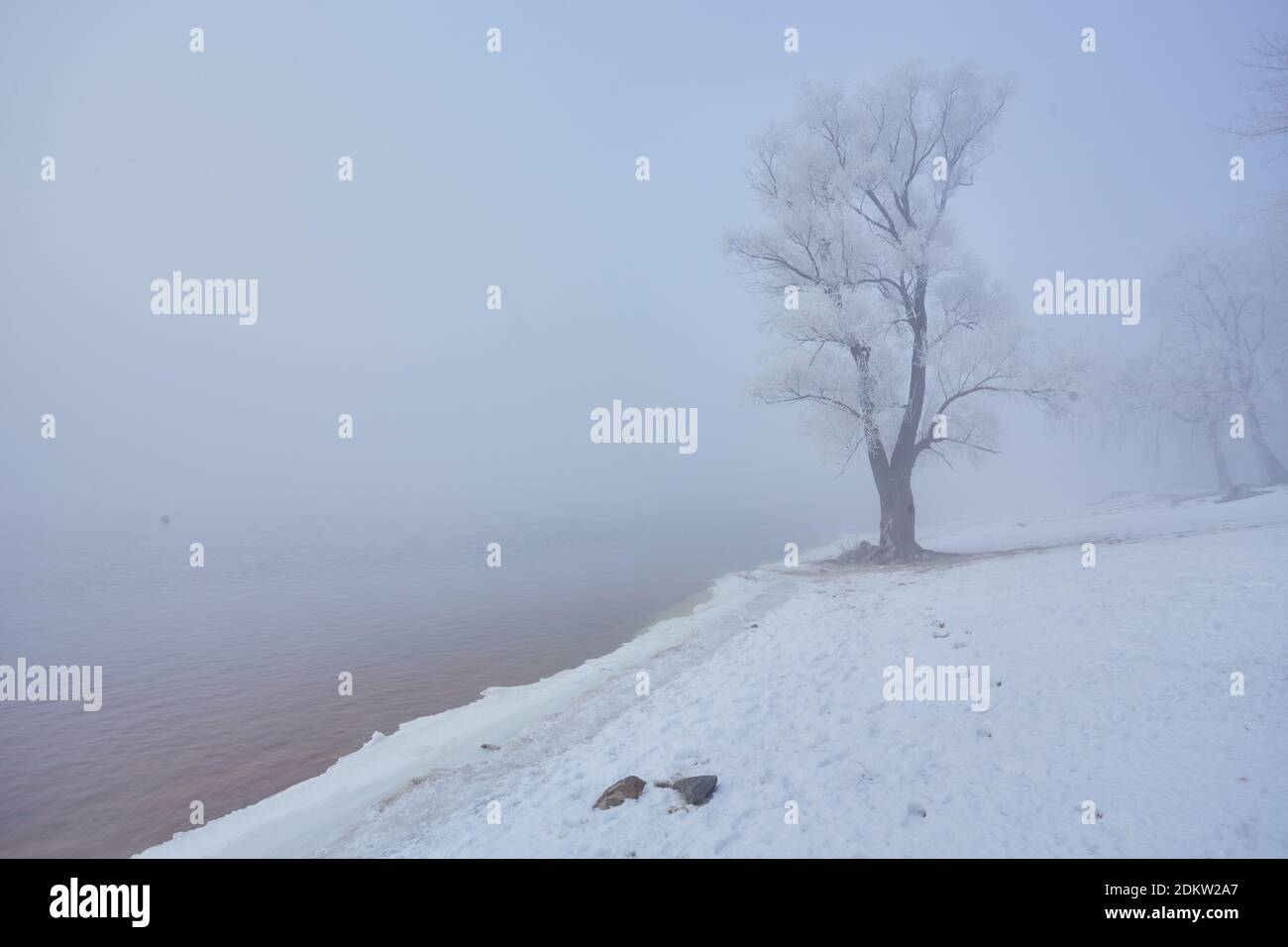 Winter river with a lone tree covered with hoarfrost on the shore Stock Photo