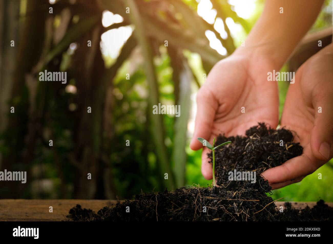 Close-up Of Hand Planting Seedling On Field Stock Photo