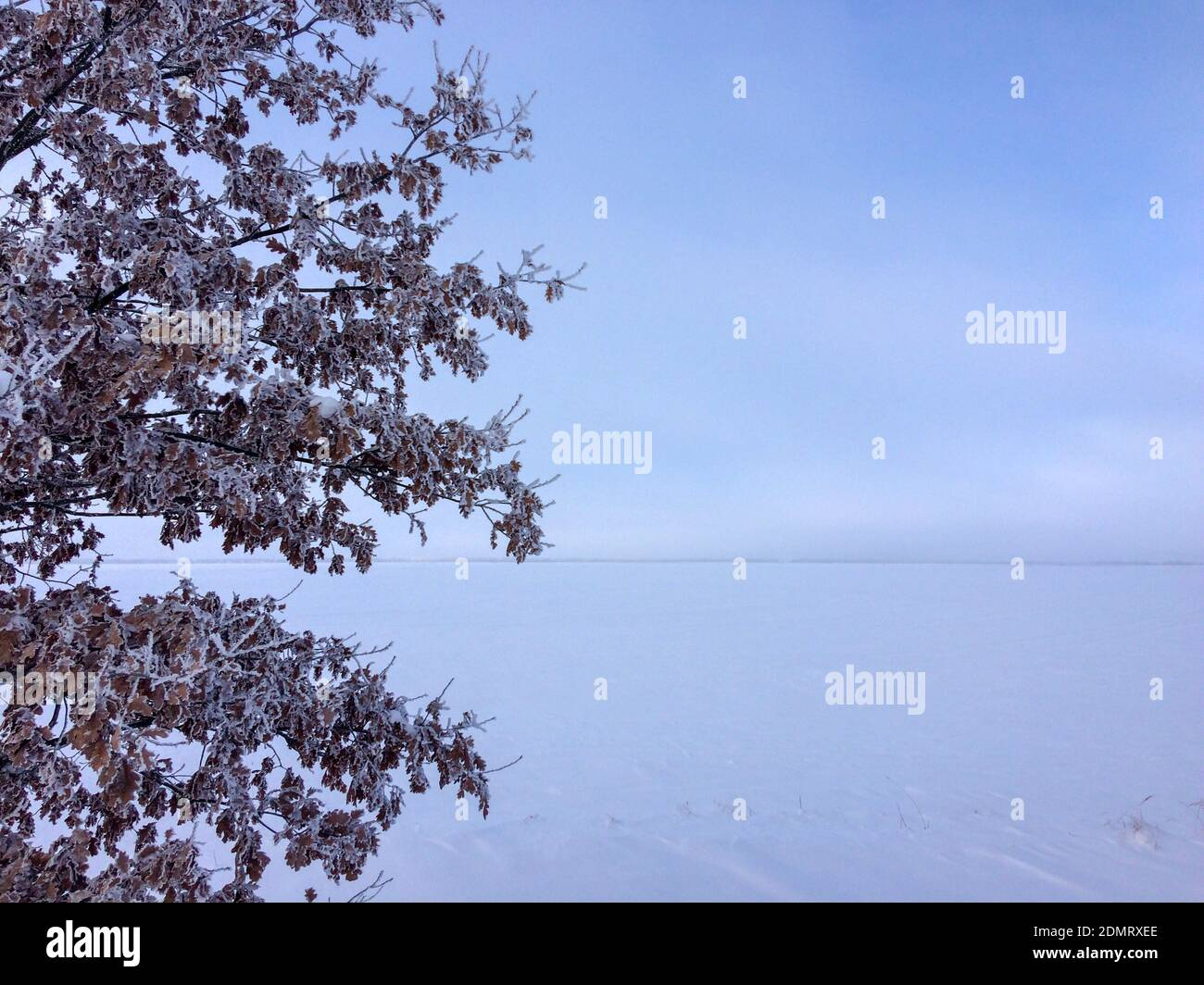 tree in the snow-covered field Stock Photo