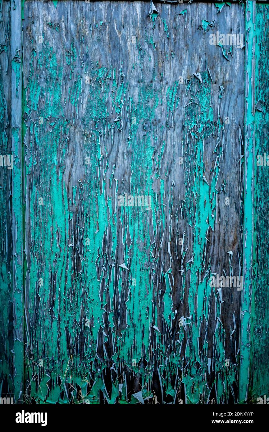 Green peeling paint on a wooden outside panel. Stock Photo