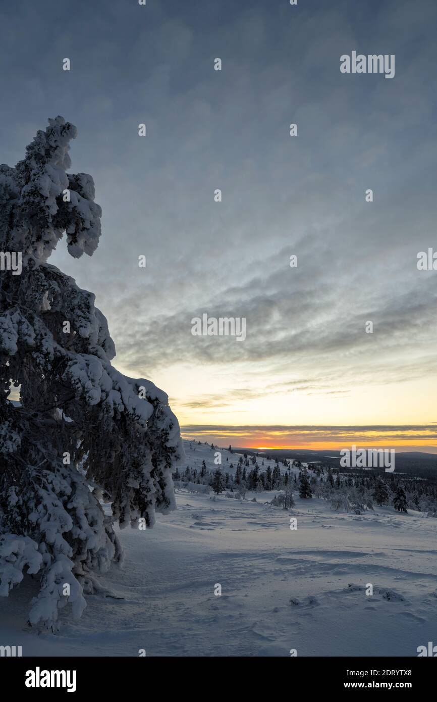 Midwinter landscape in Pallas Yllas National Park of Finnish Lapland. While sun doesn't rise, for few precious hours the light is beautiful. Stock Photo
