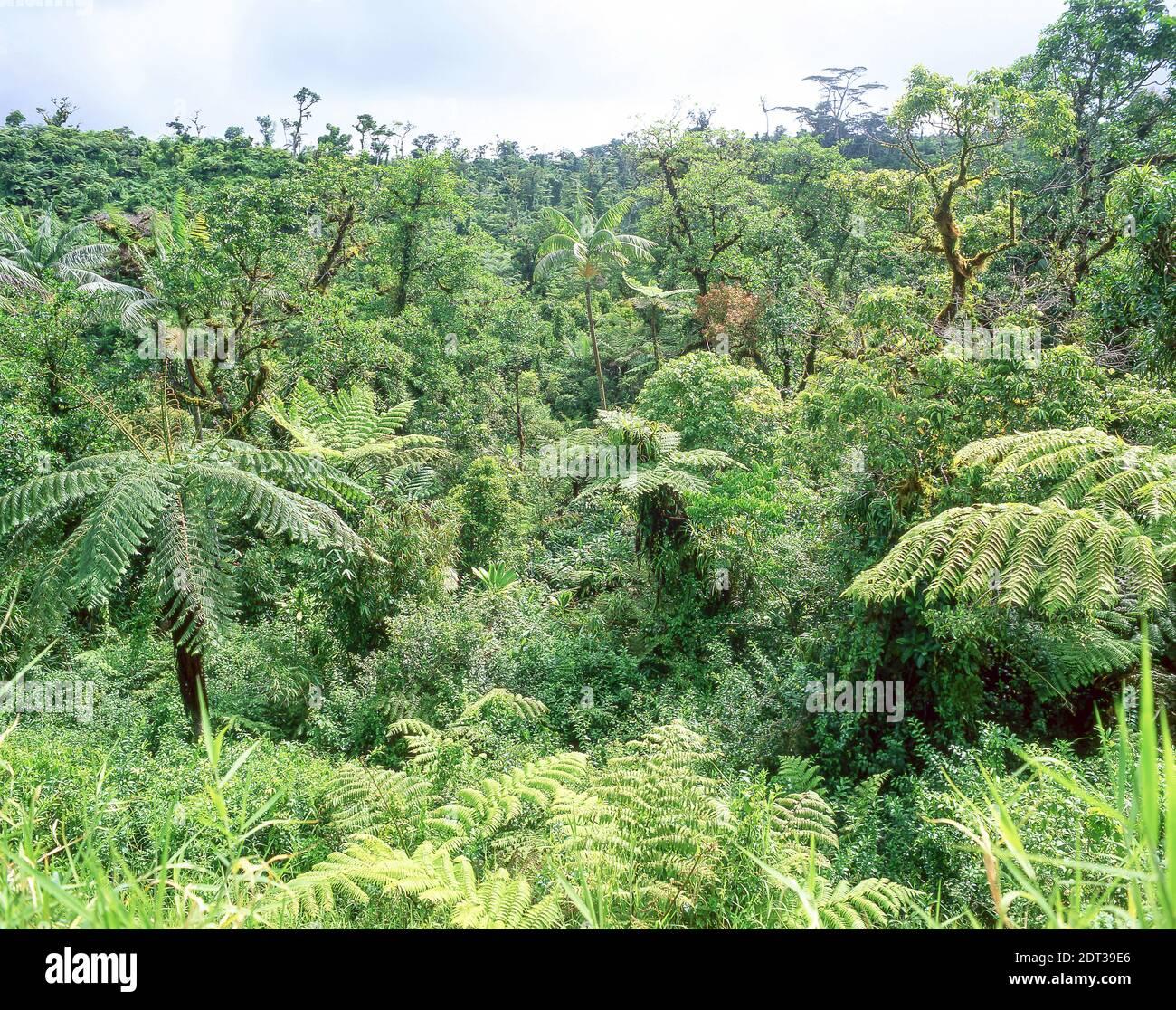 Native bush, Upolu Island, Samoa Stock Photo