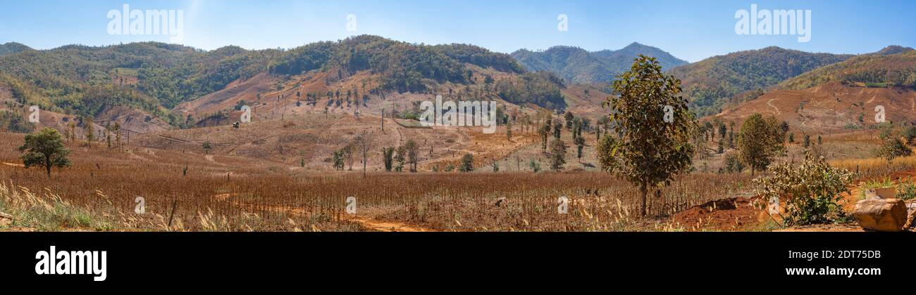 Panorama of the invading forest burned trees, dry cracked soil.Nature and environment Concept. Stock Photo