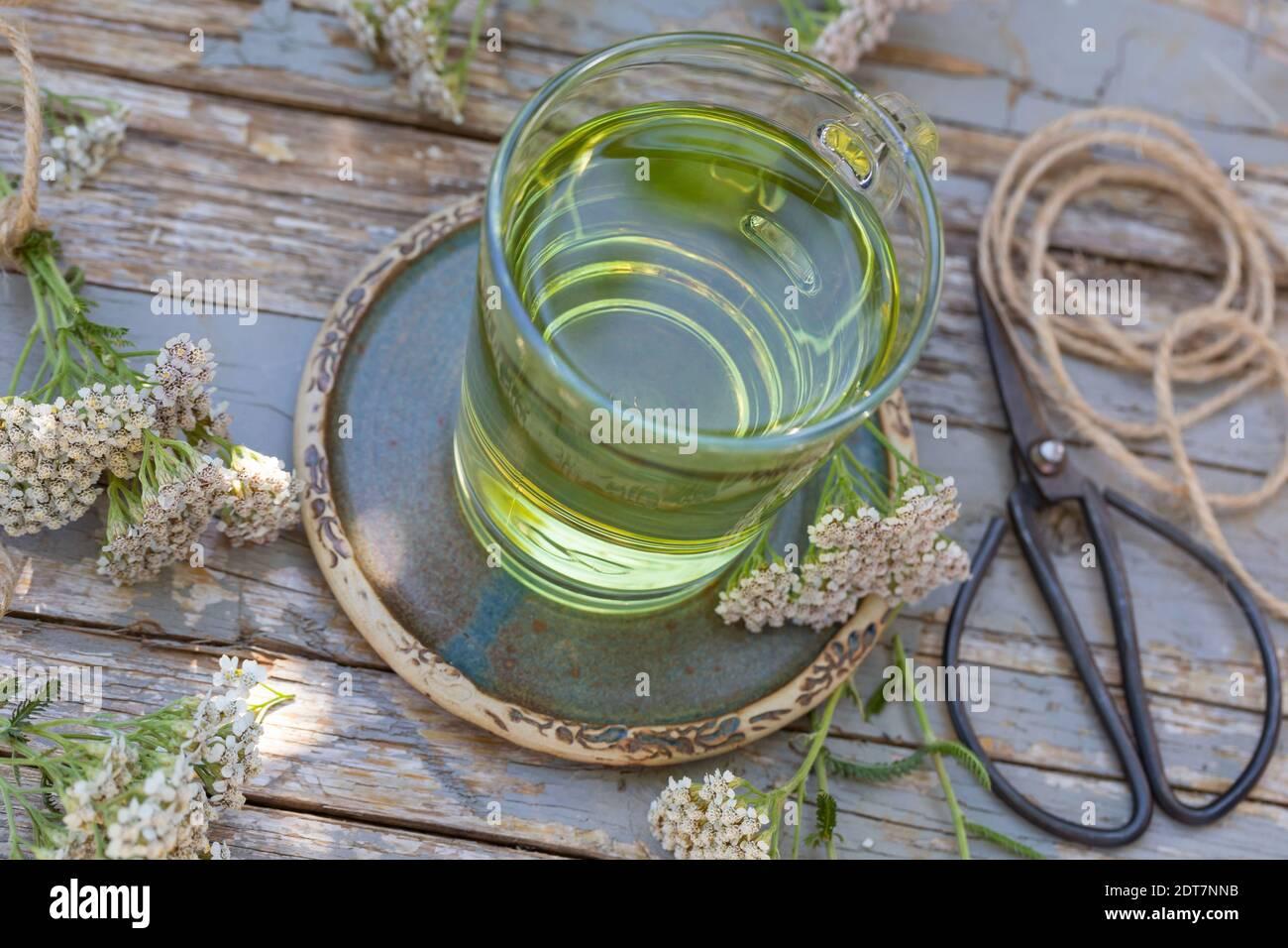 common yarrow, milfoil (Achillea millefolium), selbmade yarrow tea, Germany Stock Photo
