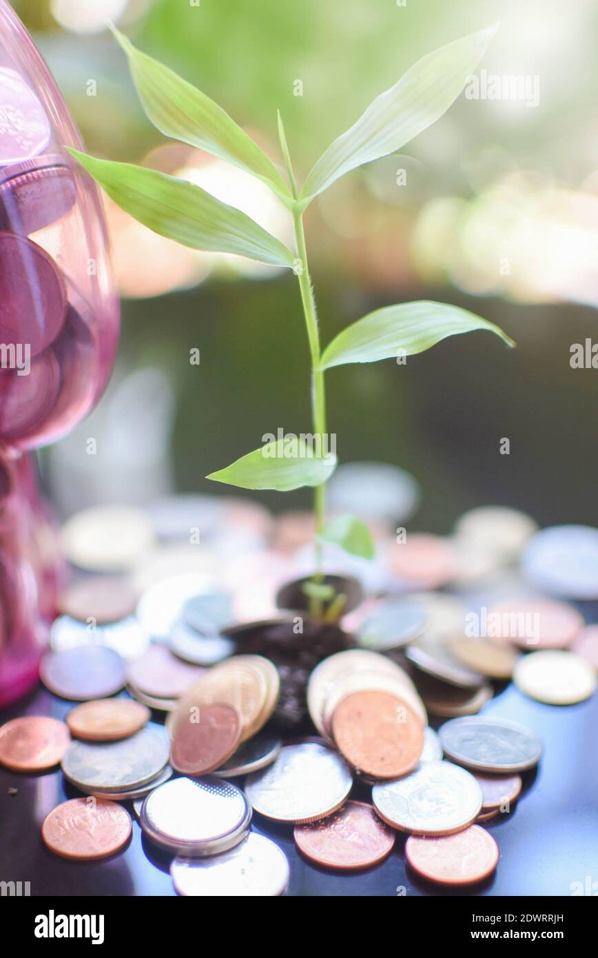 Close-up Of Coins And Seedling Stock Photo