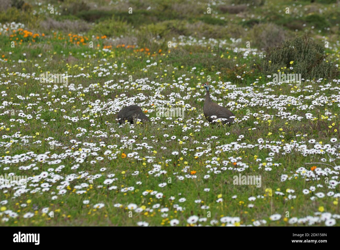 View Of White Flowering Plants On Field Stock Photo