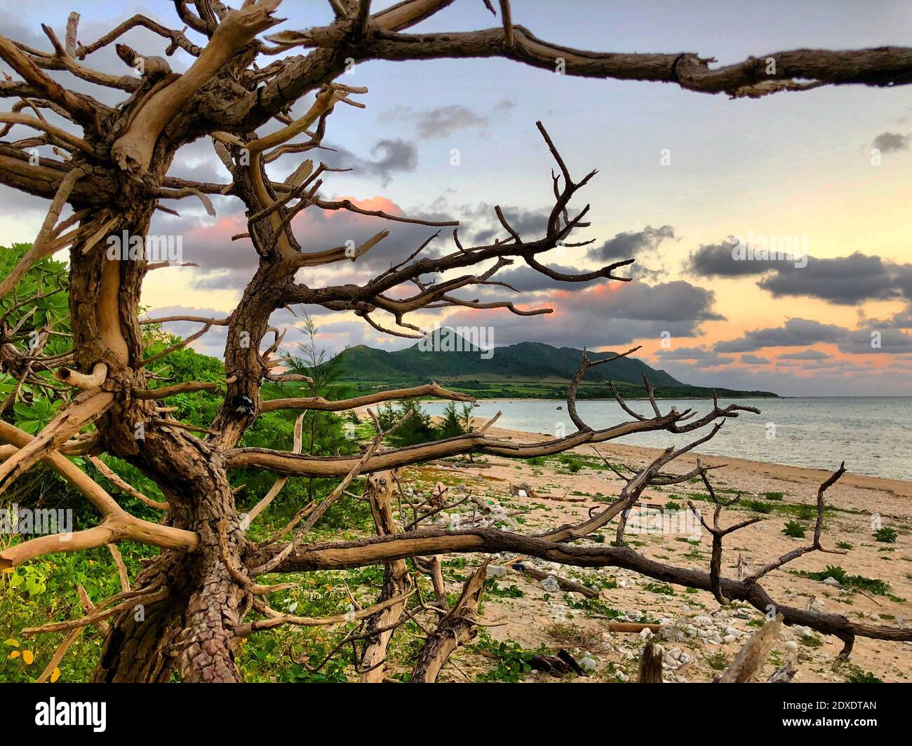 View Of Tree By Sea Against Sky Stock Photo