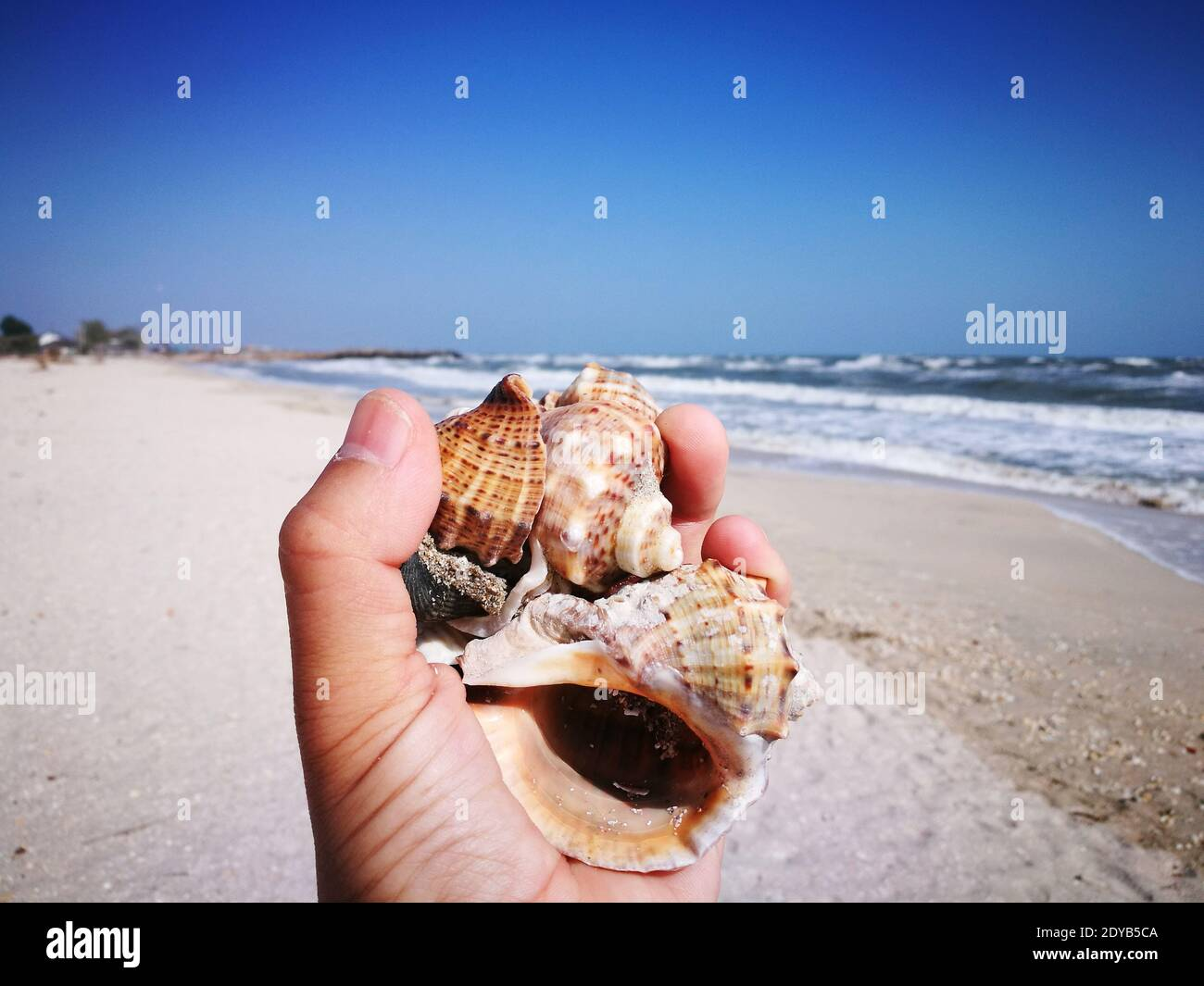 Midsection Of Person Holding Shell At Beach Against Sky Stock Photo