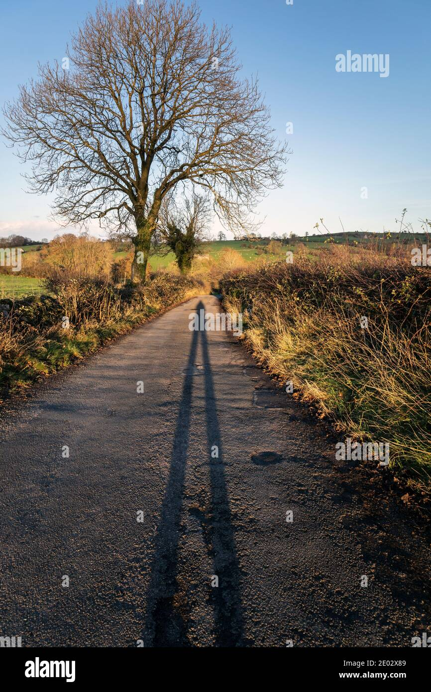 A long shadow on a country lane in late afternoon sunshine, Bonsall, Derbyshire Stock Photo