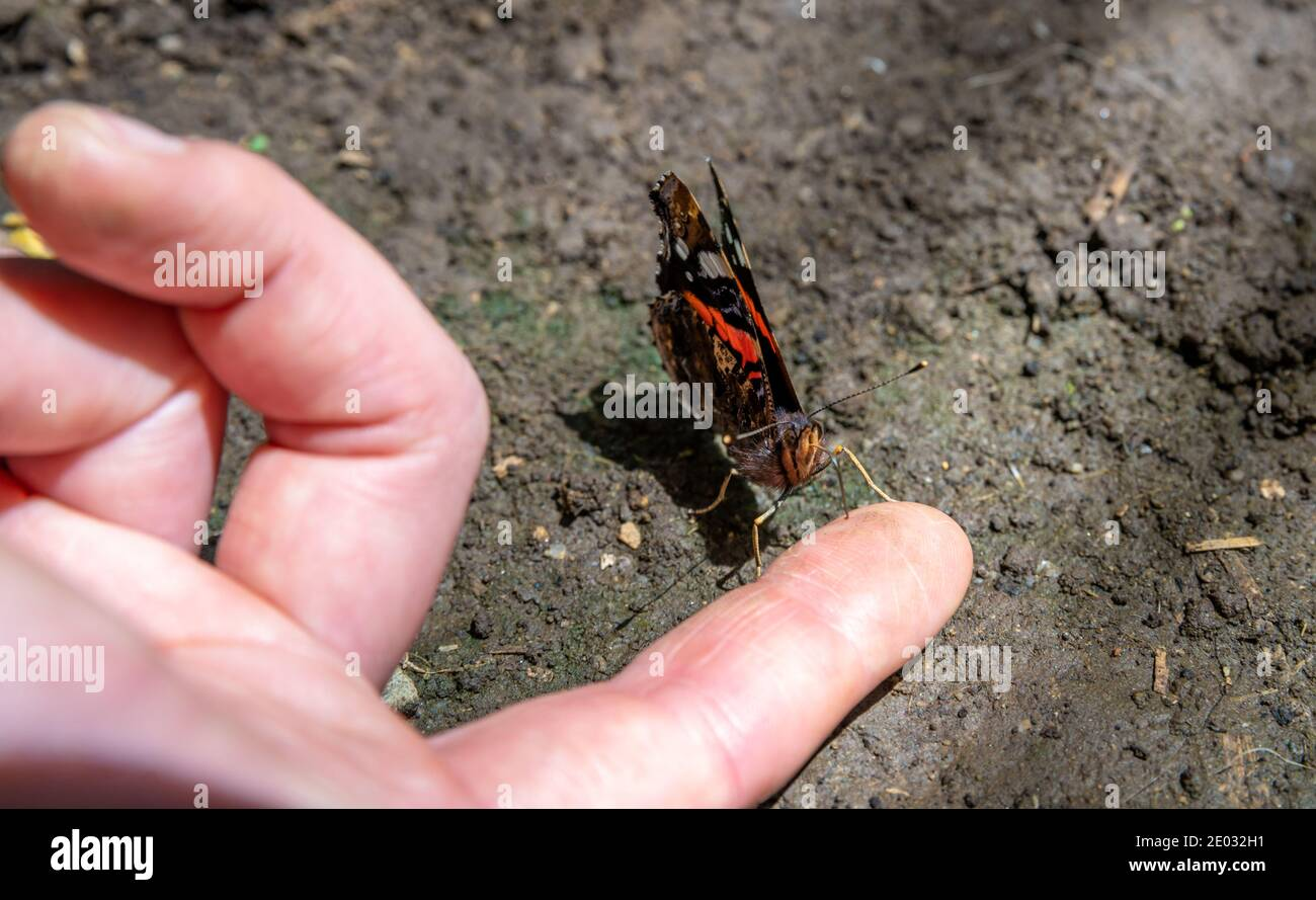 butterfly on a woman's hand in a nature reserve Stock Photo