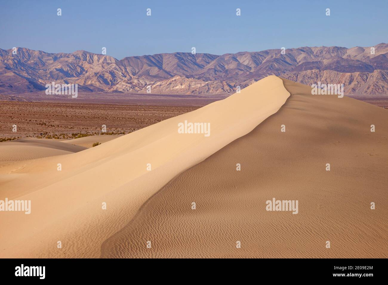Mesquite Dunes at Stovepipe Wells, Death Valley National Park, California USA Stock Photo